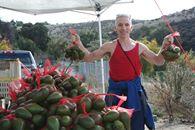 roadside avocados