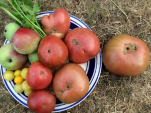 heirloom-tomatoes-from-our-garden