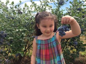 Those are blueberries, not grapes, my daughter is holding!