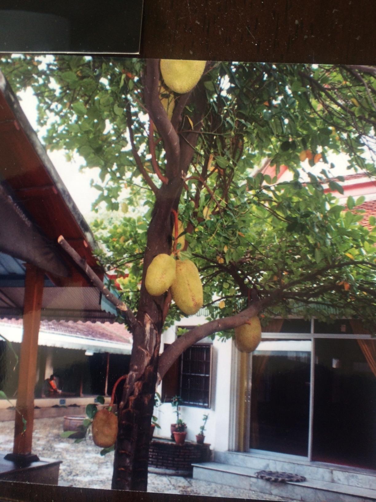 Exotic Fruit of Thailand